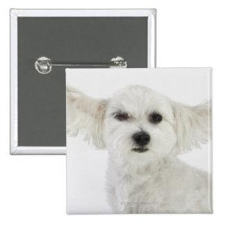 Dog winking 15 cm square badge