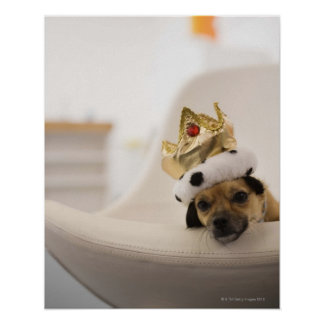 Dog with a crown poster