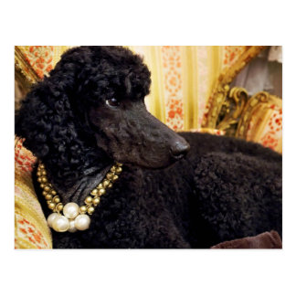 Dog with a Pearl Necklace Postcard