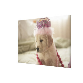 Dog with decorations on bed canvas prints