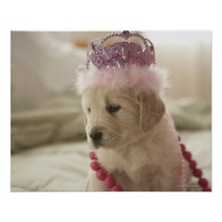 Dog with decorations on bed poster