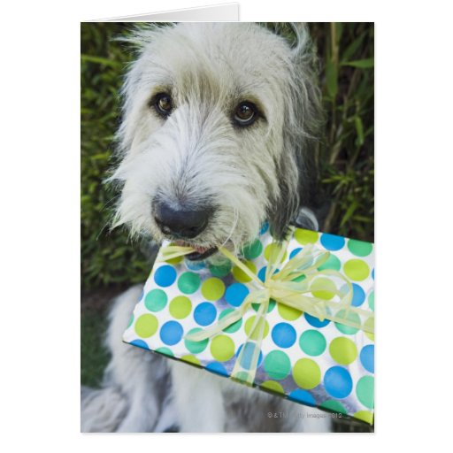 Dog with gift in mouth greeting cards