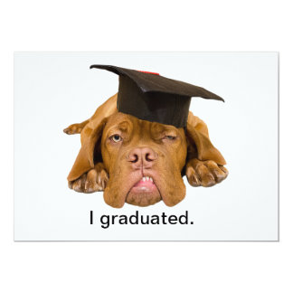 dog with graduation hat card