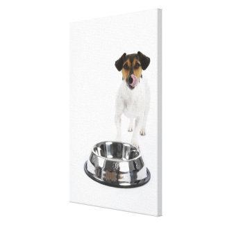 Dog with Large Bowl Gallery Wrap Canvas