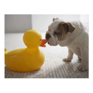 Dog with plastic duck postcard