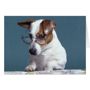 Dog with reading glasses studying map
