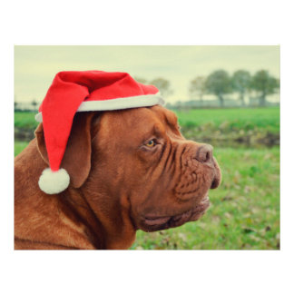 Dog with Santa hat Personalized Flyer