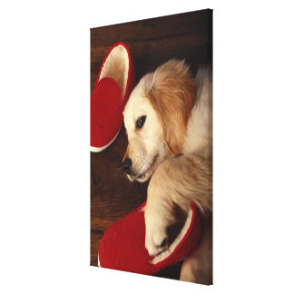 Dog with shoes lying on wooden floor, elevated canvas print