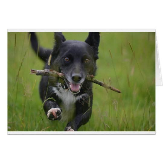 Dog with stick card
