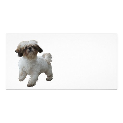 Doggy Tobby Picture Card
