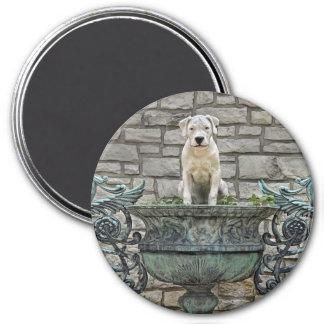 Dogo Argentino Puppy Royal 7.5 Cm Round Magnet