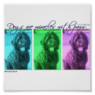 Dogs are Miracles with Paws Poster