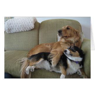Dogs Cuddling Card