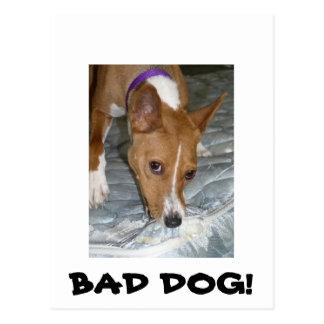 Dogs eats mattress. Bad dog. Postcard