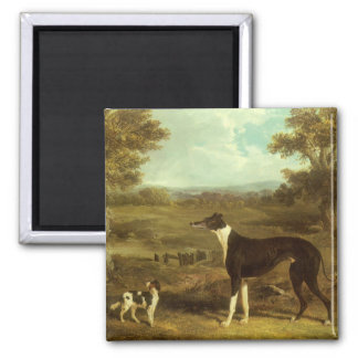 Dogs, Greyhound and Spaniel, Doctor Fop by Herring Square Magnet