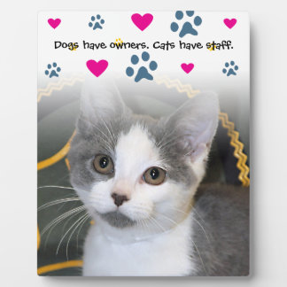 Dogs Have Owners-Cats Have Staff Display Plaques