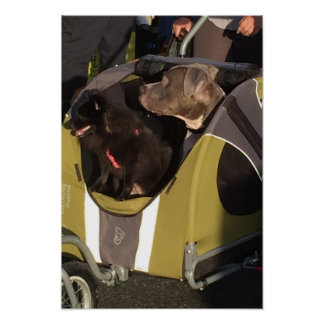 Dogs in a Carriage Poster