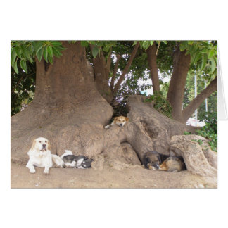 Dogs in a tree card