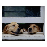 Dogs Looking Out a Window