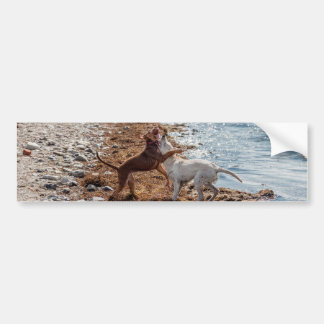 Dogs on beach bumper stickers