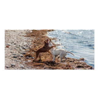 Dogs on beach personalized rack card