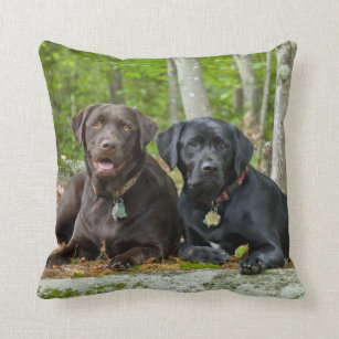 70cffaa7 Popular. Dogs Puppies Black Lab Chocolate Labrador Retrieve Cushion