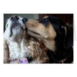 DOGS SAY TRUE LOVE-ALL YOU NEED-HAPPY ANNIVERSARY CARD