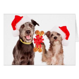 Dogs Sharing HOWLiday cheer Christmas Card