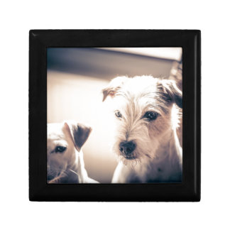 dogs small square gift box