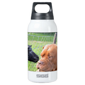Dogue de Bordeaux 0.3 Litre Insulated SIGG Thermos Water Bottle