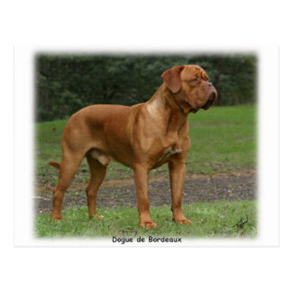 Dogue de Bordeaux 9Y201D-159 Postcard