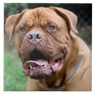 Dogue de bordeaux Ceramic Tile