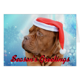 Dogue de Bordeaux Christmas card