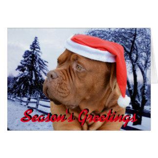 Dogue de Bordeaux Christmas card