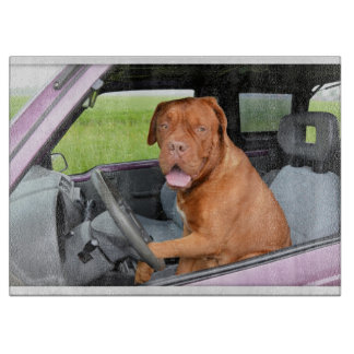 Dogue de Bordeaux driving Cutting Board