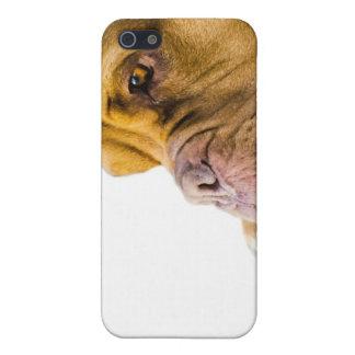 Dogue de Bordeaux iPhone 5 Case