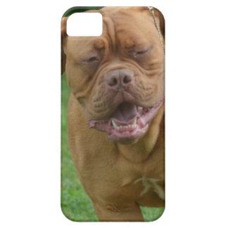 Dogue de Bordeaux iPhone 5 Covers