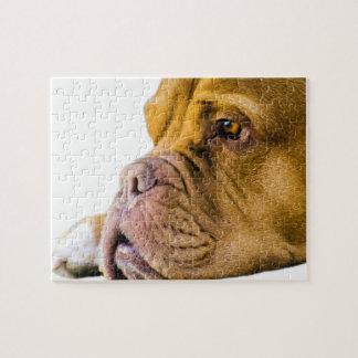 Dogue de Bordeaux Jigsaw Puzzles