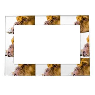 Dogue de Bordeaux Magnetic Photo Frame