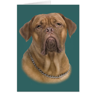 Dogue De Bordeaux Portait Card