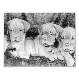 Dogue de bordeaux puppies photographic print