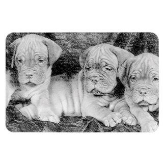 Dogue de bordeaux puppies rectangular photo magnet