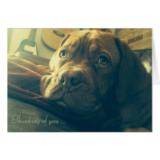 Dogue de Bordeaux Thinking of you Greeting Cards