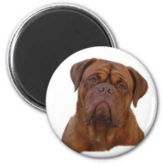 Dogue De Bourdeaux, French mastiff 6 Cm Round Magnet