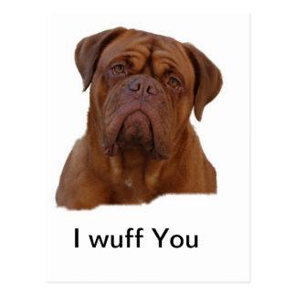 Dogue de Bourdeaux Postcard