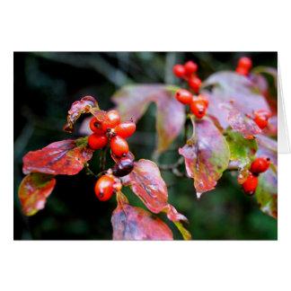 Dogwood Berries Greeting Card