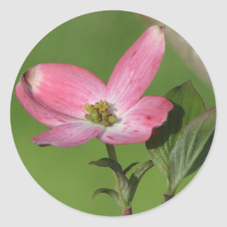 Dogwood Bloom Round Stickers