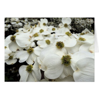 Dogwood Blossom floral greeting card