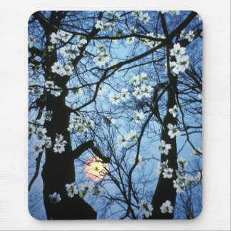 Dogwood blossoms with sunset mouse pad