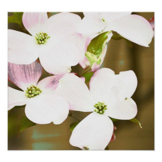 Dogwood Floral Expression Posters